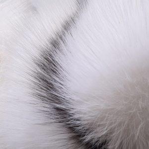 Лиса арктическая