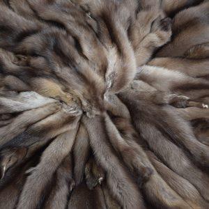 Соболь дикий баргузинский